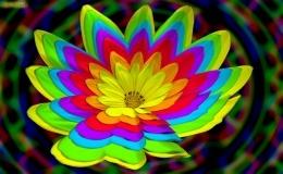 Wildflower, blue, bright, Flower, green, neon, orange, purple, red, yellow