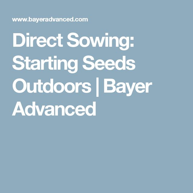 Direct Sowing: Starting Seeds Outdoors | Bayer Advanced