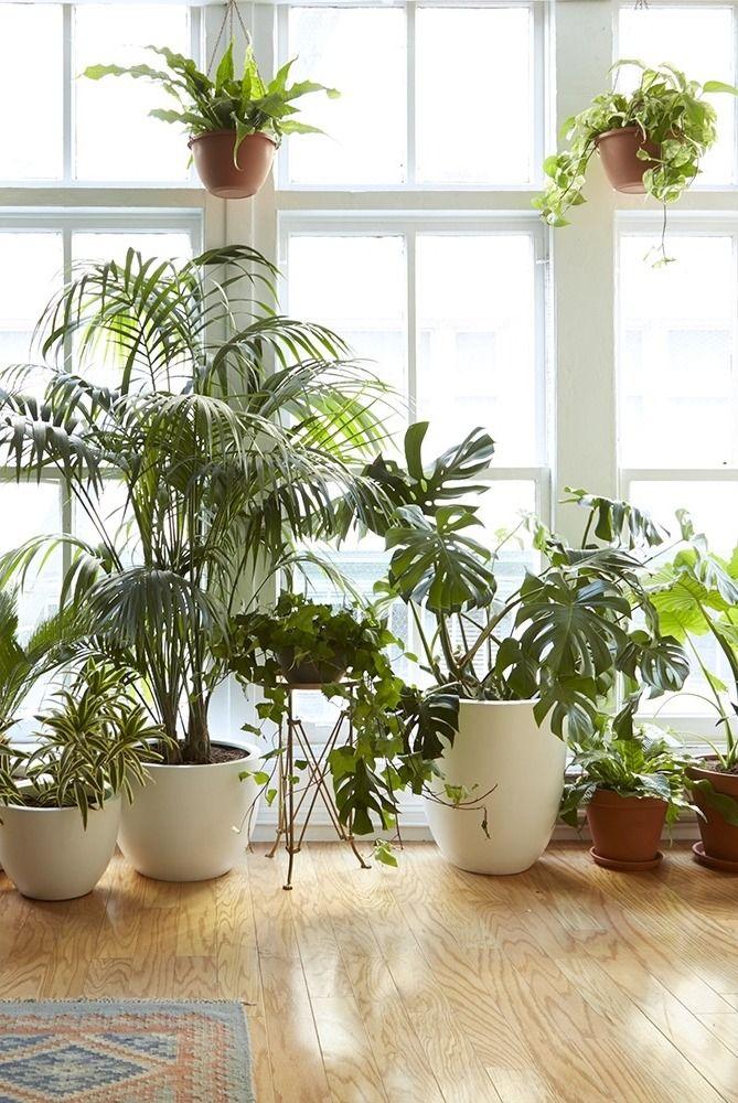 8 houseplants that can survive urban apartments plantes for 020 interieur