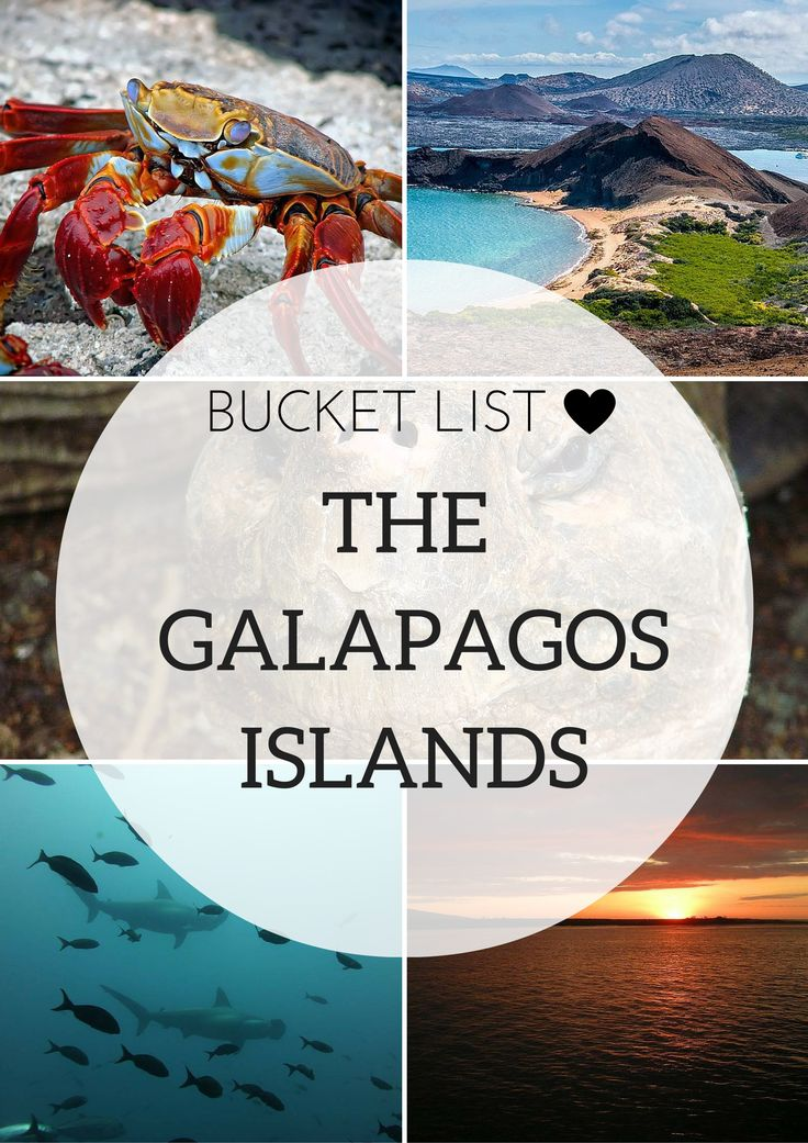 Soft, snow-white sand. Belching sea lions at your feet. Radiantly colored fish swimming before you. These are the things that come to mind when one dreams of a visit to the Galapagos Islands. Today I am taking you there with lots of amazing pictures.