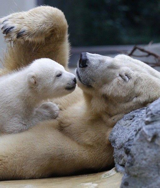 Anori, the baby polar bear from the Berlin Zoo