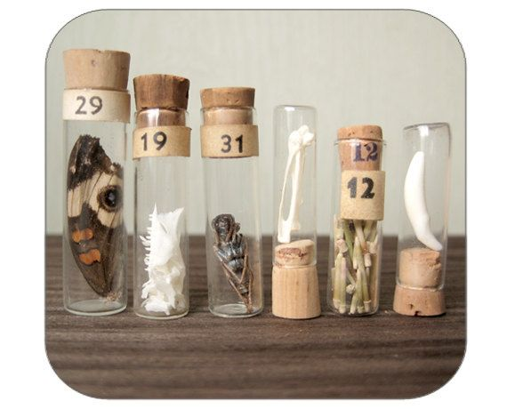 Vials with curiosities for your cabinet out of time, inside's space....