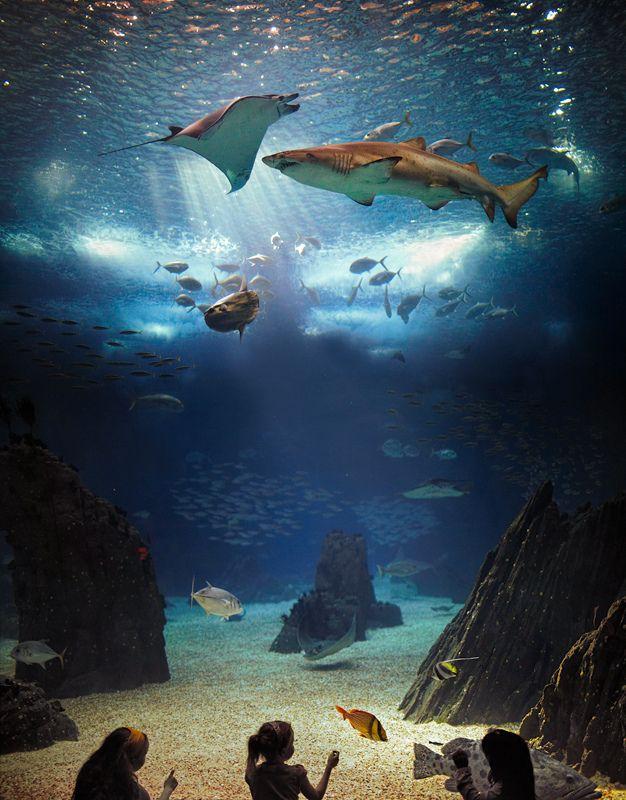 17 Best Images About Aquariums On Pinterest Georgia