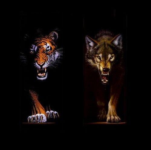Картинка тигр лев волк