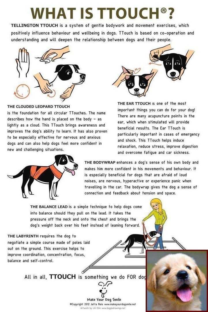 Dog Behavior Kicking Up Dirt And Clicker Training Dogs Pdf Puppy Training Dog Care Dog Training Obedience