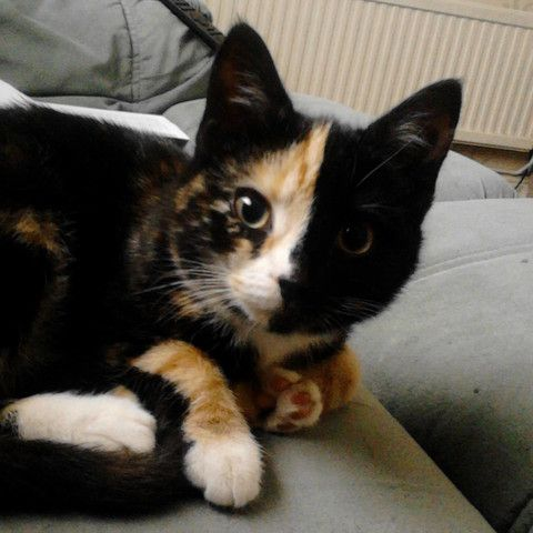 Chubby parade kitty kat milf