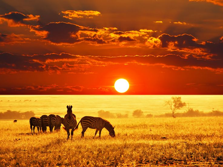 18 best images about African Savanna on Pinterest   Pictures of ...