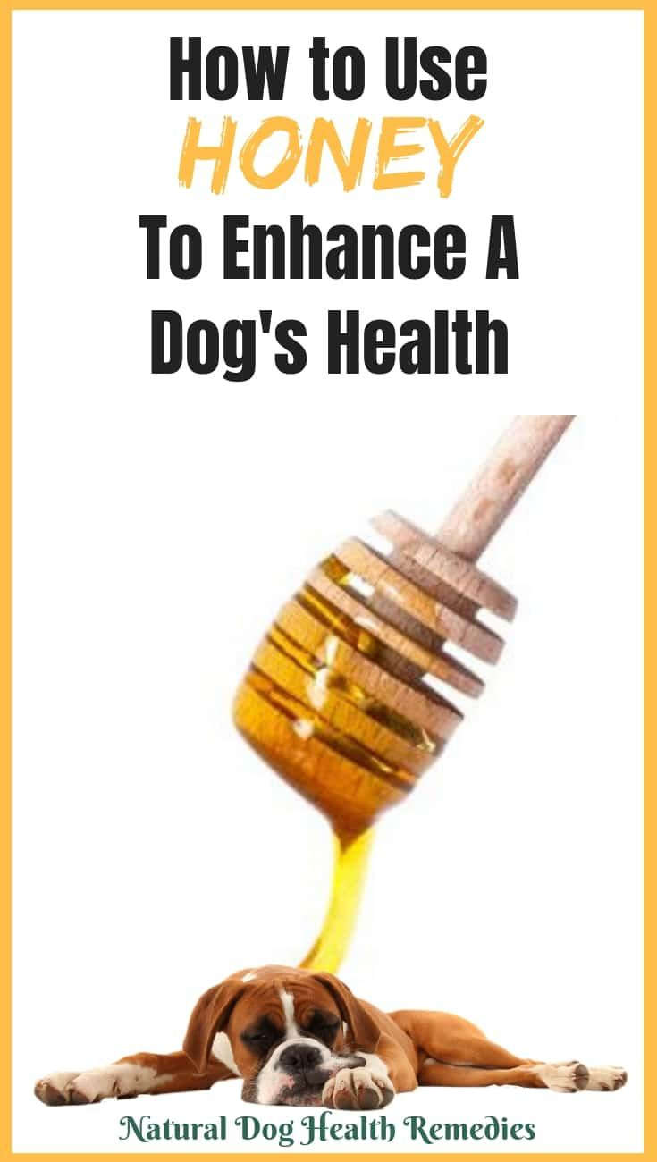 Honey Benefits To Dogs With Images Honey Benefits Can Dogs
