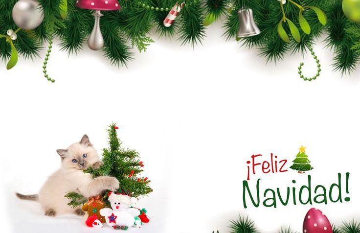 #Tarjeta de #Navidad #Gato Ternura #kitty #kittycat #christmas #cards #free #greetings #greetingsfree http://bit.ly/11c95L3