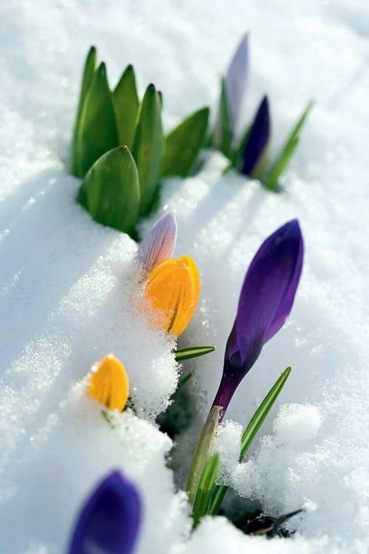 картинка скоро весна на телефон понять, какой