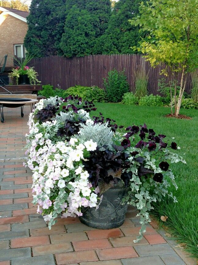 17 best images about what to put inside of containers on - Wave petunias in containers ...