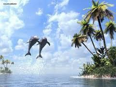 behang dolfijn - Google zoeken