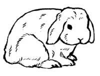 55 best images about Rabbit Images on Pinterest | Easter ...
