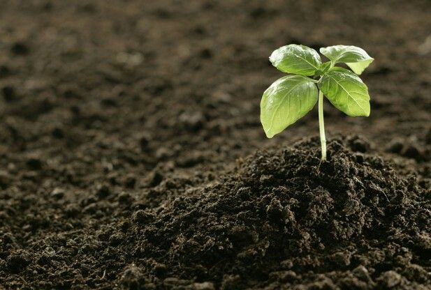 17 best images about secure contain protect on pinterest for What does soil contain
