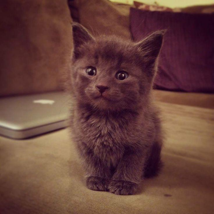 Meet Catt Damon. Future Mouse Exterminator