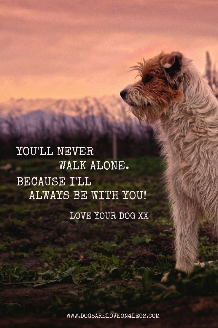 You Ll Never Walk Alone Because I Ll Always Be With You Dog Quote Dog Walking Quotes Dog Qoutes Funny Animal Quotes