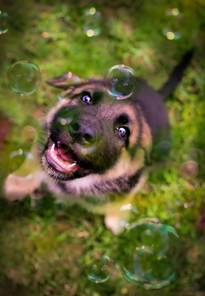 BUBBLES + PUPPY = Heaven - Creative Animal Portraits