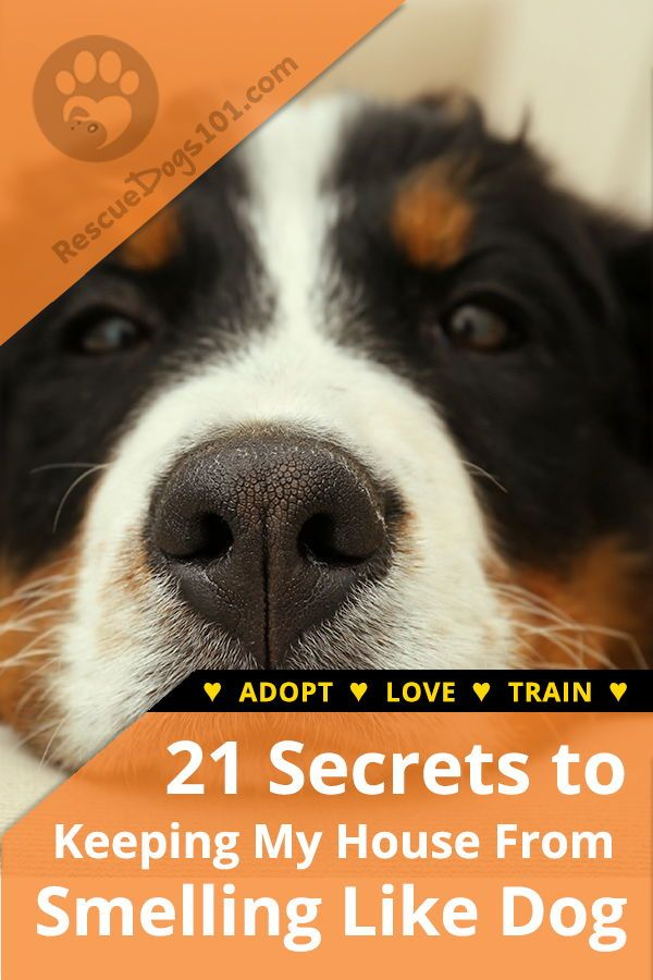 21 Secrets To Keeping My House From Smelling Like Dog Dog Smells