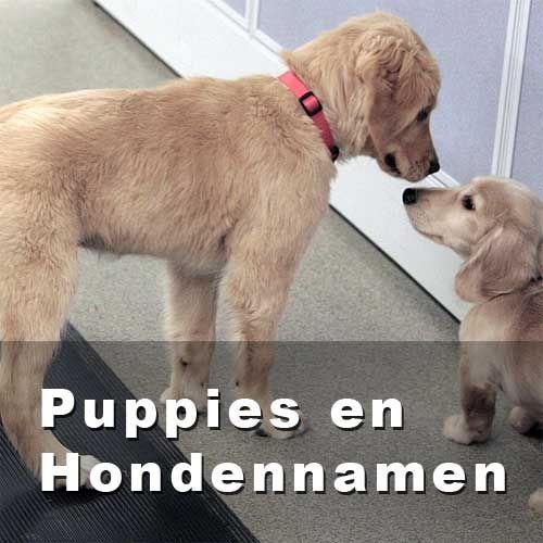 Een passende hondennaam met betekenis kiezen voor pasgeboren puppy of nieuwe hond in huis kan lastig zijn. Zoek in de namenlijsten voor bekende hondennamen.