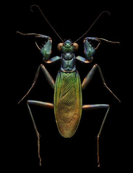 Best Living Jewels Images On Pinterest Beetles Bugs And - Each of these macro bug photographs is made from thousands of individual images