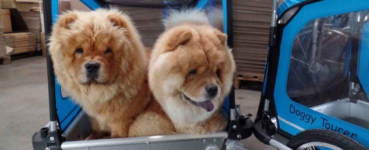 Es gibt Doggypads, sowie auch orthopädische Hundebetten und passgenaue Halterungen für den DoggyTourer. Bild: KidsTouring
