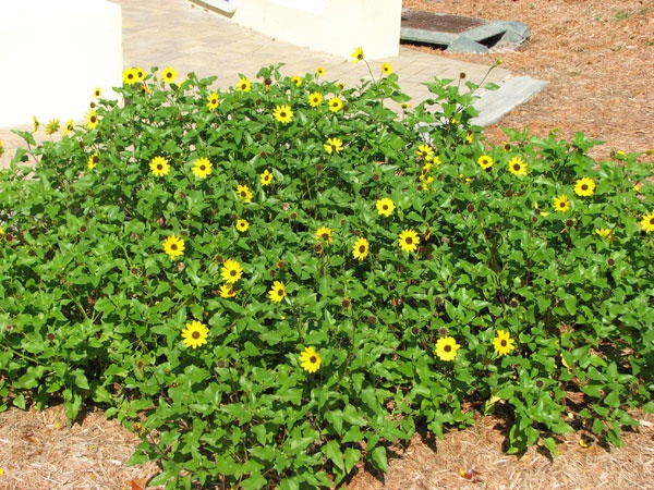Garden Landscaping Curb Appeal Plants