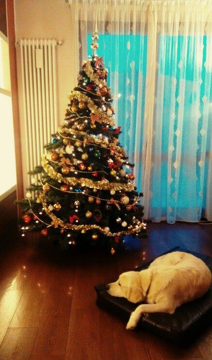 #Natale 2015