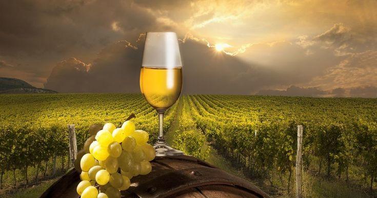 E' un Fiano della scuola enologica di Avellino il miglior vino d'Italia.