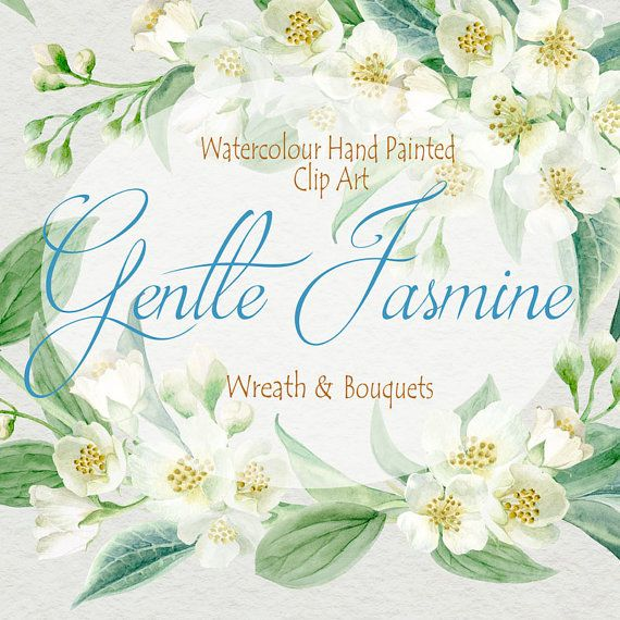 Watercolor Flower Clipart Collection  Gentle Jasmine  Hand