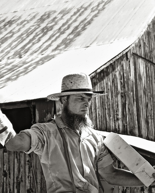 A Life in the Sun  - Amish Auction