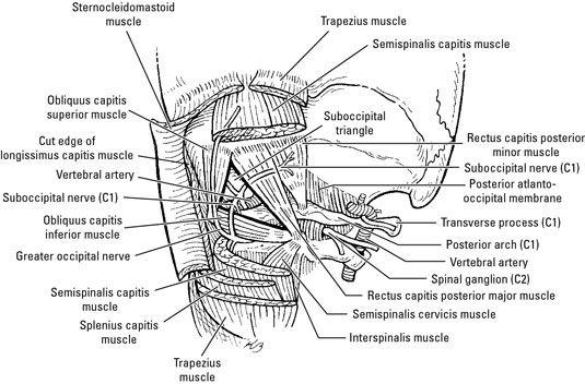Homework help for anatomy