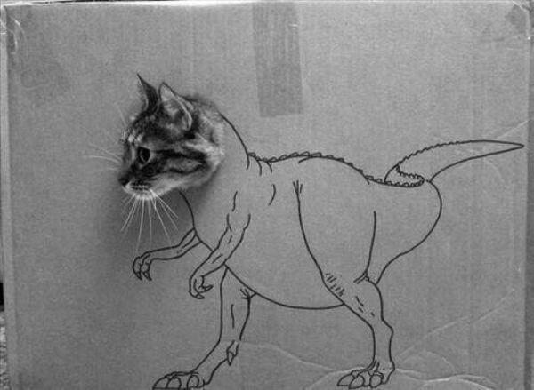 Funny Cats — 22 Pics