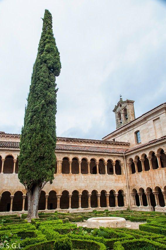 El cipres y el jardin del claustro de santo domingo de Silos