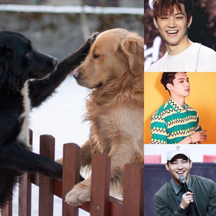 ChineseZodiac&KPOP // Dog // JB of got7