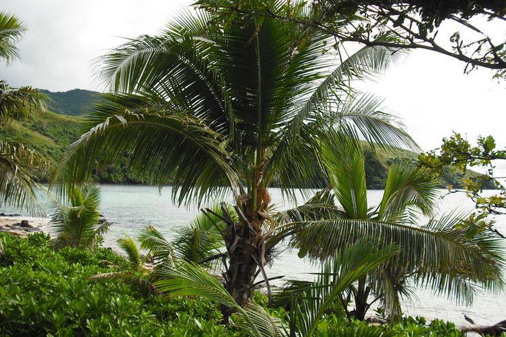 Naboro Village, Fiji