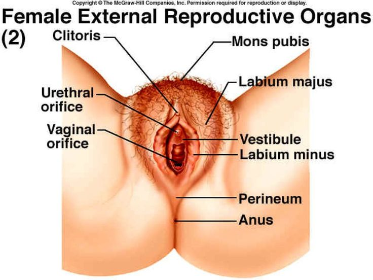 External Female Reproductive System Anatomy