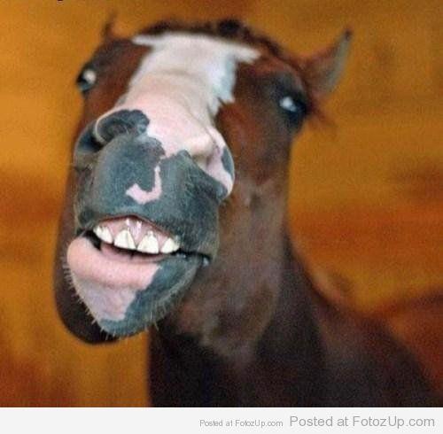 Smiling animals (35)