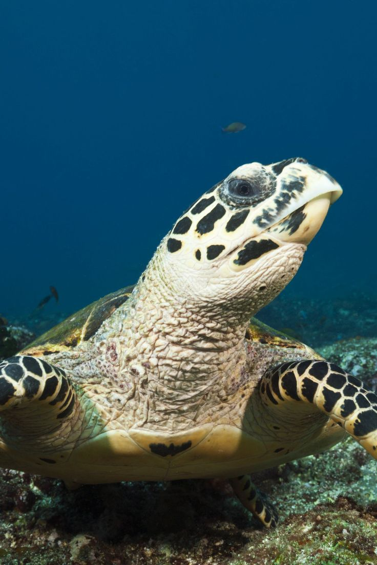 24 Amazing Animals That Are Almost Extinct in 2020 (With