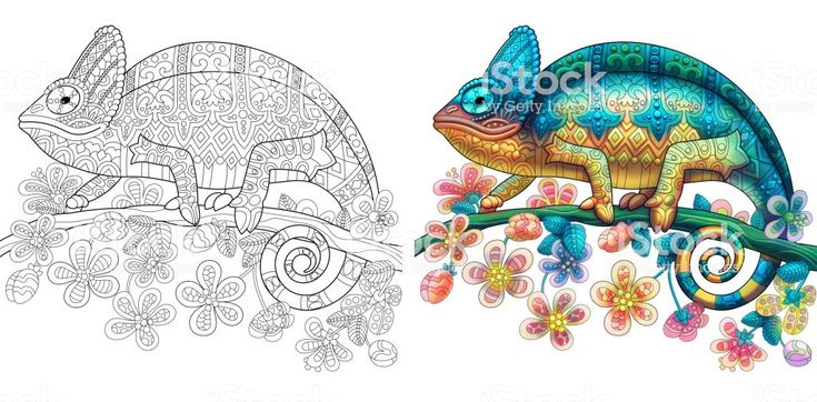 chameleon lizard monochrome coloring page and colored