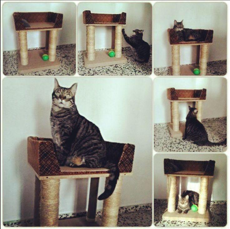 Cómo hacer una cama y rascador para gatos