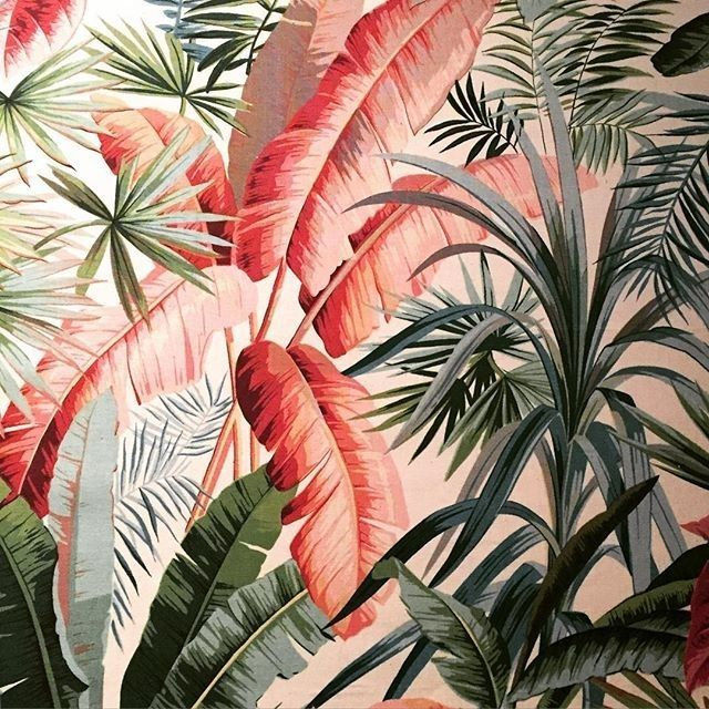 so tropical | ban.do