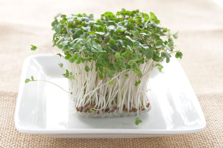 The next big diabetes drug may have been sitting in the salad bar all along. Researchers say concentrated broccoli sprout extract could be an excellent tool for regulating blood glucose in people with Type 2 diabetes (T2D).