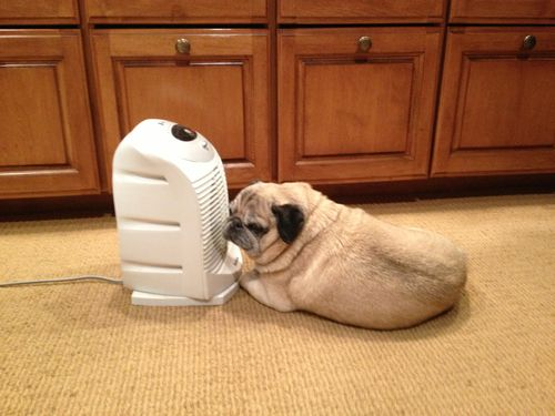 Could he get any closer to the heater??