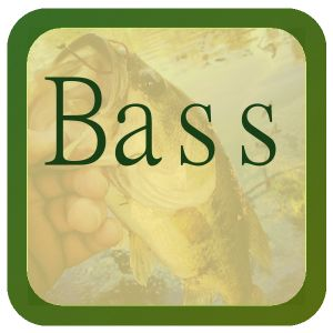 Bass Basics Bass Fishing Gear Bass Fishing Articles Bass Fishing Videos Bass Recipes Bluegill Basics Bluegill Fishing Gear Bluegill Fishing Articles Bluegill Fishing Videos Bluegill Recipes Carp Basics Carp Fishing Gear Carp Fishing Articles Carp Fishing
