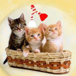 Doua pisicute si un motanel Sunt cadoul meu de Martisor Ei iti soptesc incetisor, Langa inima ta sa le gasesti un locsor. http://ofelicitare.ro/felicitari-de-1-martie/cadou-de-martisor-489.html