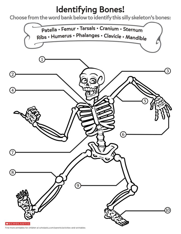 Help your child learn about growing bodies with this bone ...