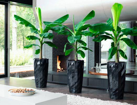 Декоративно - лиственные растения