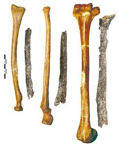 Un-prénéandertalien à Tourville-la-Rivière il y a 200 000 ans