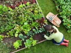 Διατροφική αυτάρκεια στην πόλη: εύκολα βήματα για να φυτέψουμε τα δικά μας λαχανικά