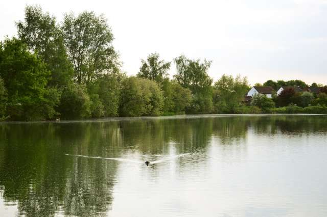 view of lake and duck